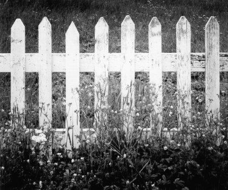 Randomosity- Through Fences