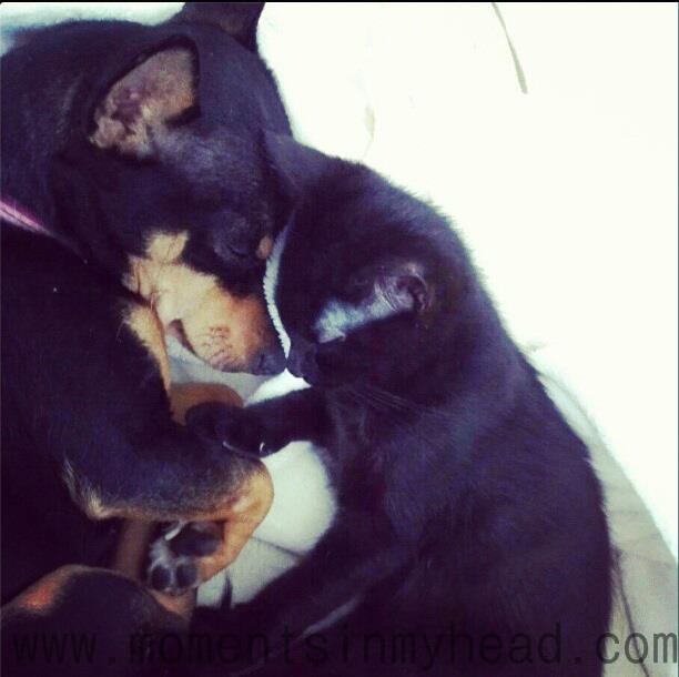 Lola and Ninja enjoying a nap